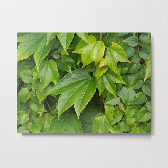 just leaves -2- Metal Print