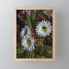 White Argentine_Giant_Cacti in Bloom Framed Mini Art Print
