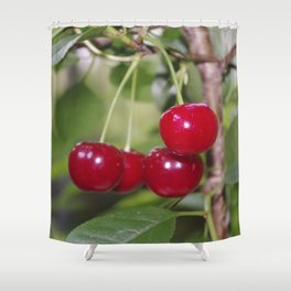 Cherries, fresh on the tree Shower Curtain