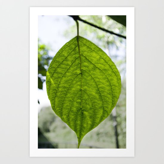 Leaf Green Art Print