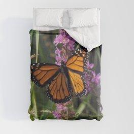 Monarch Splendor Comforters