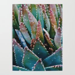 Orange and Green Succulent Poster