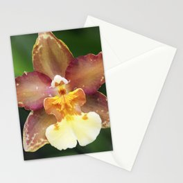 Longwood Gardens Orchid Extravaganza 73 Stationery Cards