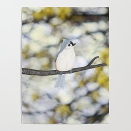 tufted titmouse - bokeh Poster