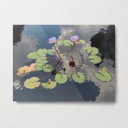 Lilypad Pond Metal Print