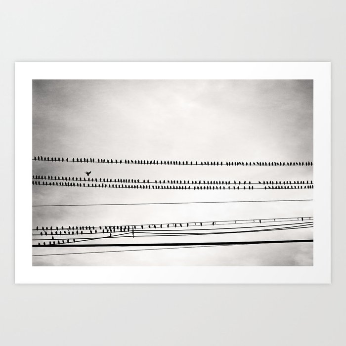 Birds on Wire Black and White Photography, Birds on Telephone Wires ...