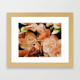 Ravishing Roses Framed Art Print