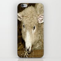 lamb iPhone & iPod Skins featuring Lamb by Raymond Earley