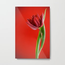 Single red tulip with green leaves Metal Print