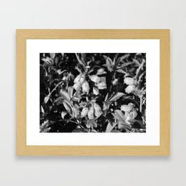 Tiny Blossoms On A Dirt Road in Black and White Framed Art Print