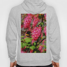 Bumble Bee and Blood Currant Ribes Sanguineum std Hoody
