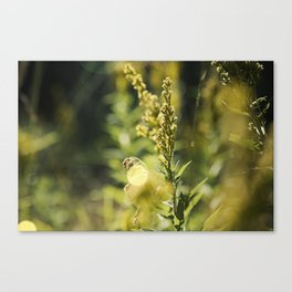 Mountain Meadows 02 Canvas Print