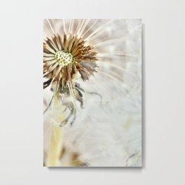 Dandelion 2013 no.20 Metal Print