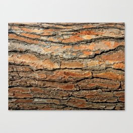 Bark 05 Red Brown Canvas Print
