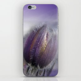 Pasque-flower on texture -2- iPhone Skin