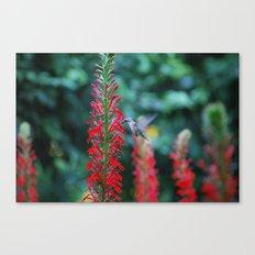 Hummingbird in Boston Canvas Print