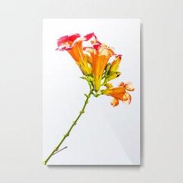 Exposured Flower Metal Print