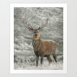 Red Deer Stag in Snow Art Print