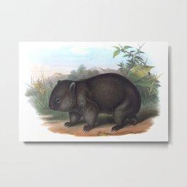 Wombat in the nature of Australia Metal Print