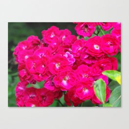 More Flowers!  Canvas Print