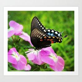 Swallow Tail Butterfly Art Print