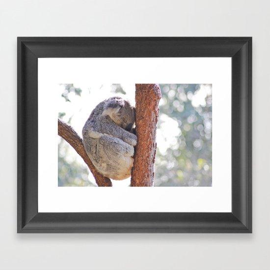 Sleeping in the Trees - Koala Bear Framed Art Print