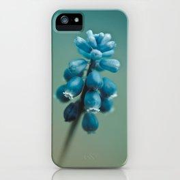 Blue Flower, Grape Hyacinth iPhone Case