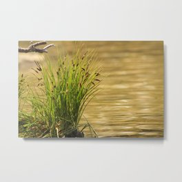 At the Water's Edge Metal Print