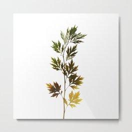 herbarium, natural Metal Print