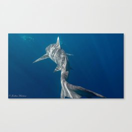 Peaceful Lemon Shark Canvas Print