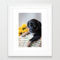 puppies Framed Art Prints featuring Puppies by Photography By SidD