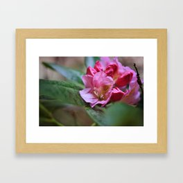 Pretty in Pink3 Framed Art Print