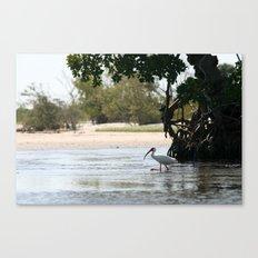Mangrove Shade Canvas Print
