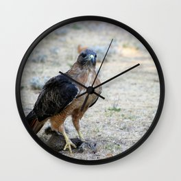 Red Tailed Hawk Catch Wall Clock