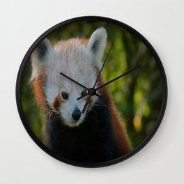 Red Panda Gaze Wall Clock