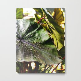 Sunlight After Rain -The Garden Series Metal Print