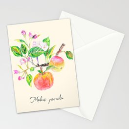 Apple tree branch, Malus Pumila Stationery Cards