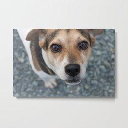Dog at the James River Metal Print