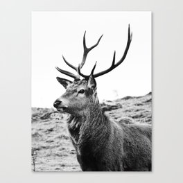 The Stag on the hill - b/w Canvas Print