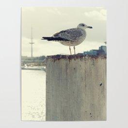 Möwe Kiel Poster