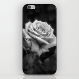 Pink Roses in Anzures 3 B&W iPhone Skin