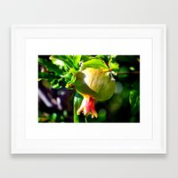 pomegranate Framed Art Prints featuring pomegranate by  Agostino Lo Coco