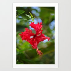 Scarlet Flower Art Print