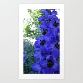 Little Blue Blossom  Art Print