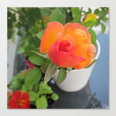 Rosey Bright Canvas Print