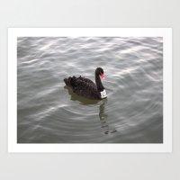 Albert Park Black Swan Art Print