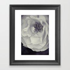 Black & White Rose Framed Art Print