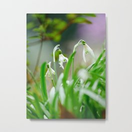 Snowdrops Metal Print