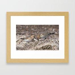 Baird on the Beach! Framed Art Print