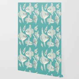 Mola mola Wallpaper